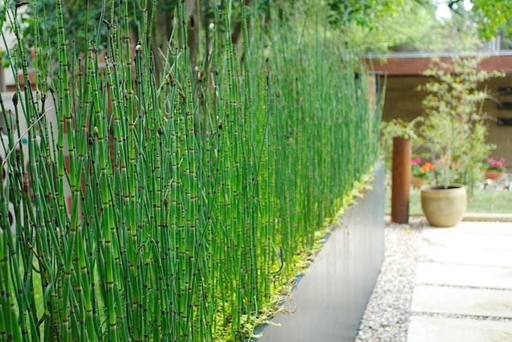 Piante da siepe in vaso piante grasse siepe in vaso - Bambu in vaso da esterno ...