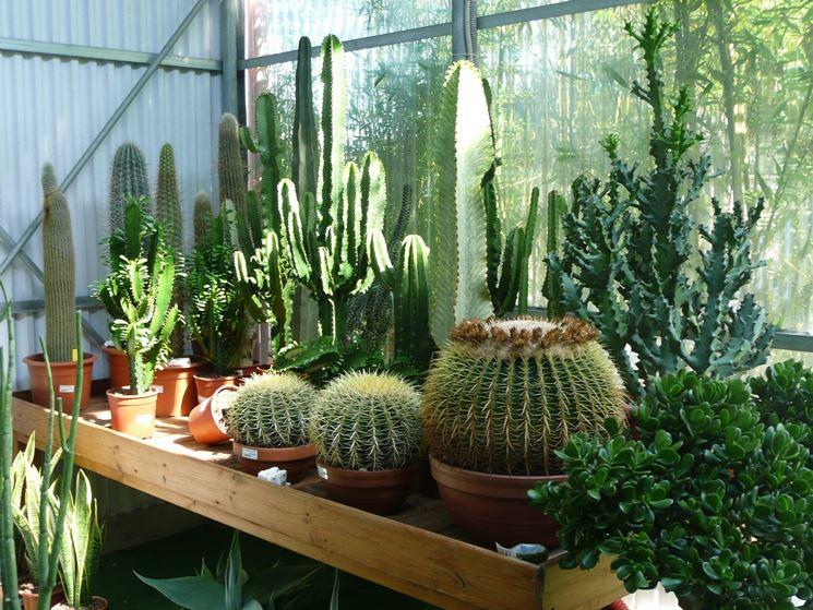 piante del deserto piante grasse caratteristiche delle