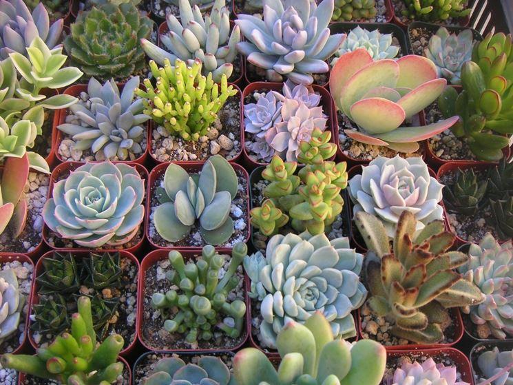 La grande varietà delle piante grasse