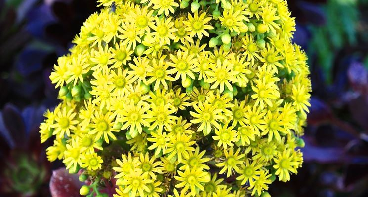 piante grasse con fiori piante grasse piante grasse