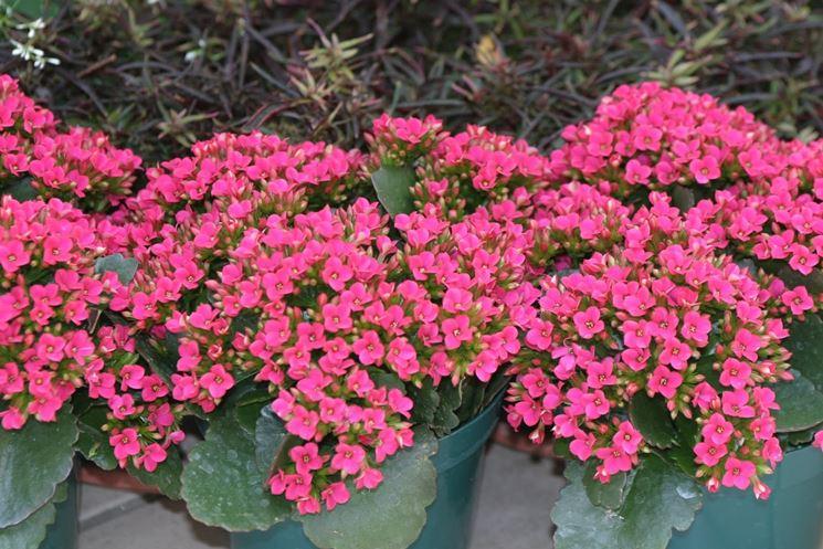 Piante fiorite da giardino - Piante fiorite ...