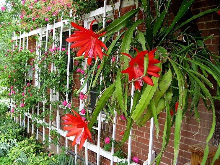 Piante grasse da giardino piante grasse piante grasse - Piante grasse da esterno pendenti ...