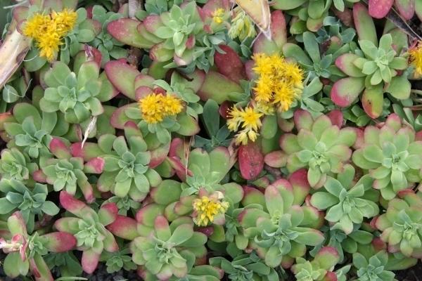 Piante grasse inverno piante grasse le piante grasse for Piante esterno resistenti