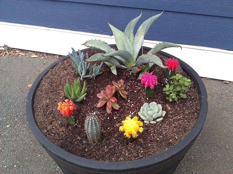 una variet� di piante grasse e fiori colorati