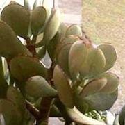 piante grasse particolari