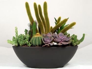 Esemplari di piante grasse in vaso