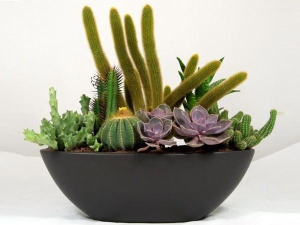 Piante grasse tipi piante grasse conoscere le piante for Piante grasse in casa