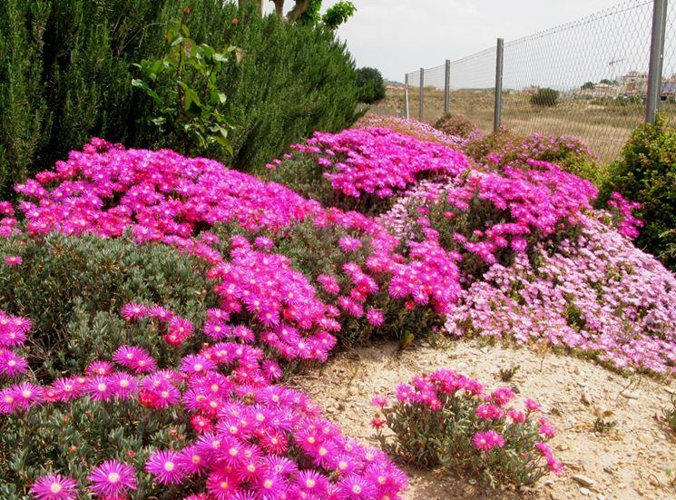 Semi di piante grasse piante grasse seminare piante grasse for Piante grasse in giardino