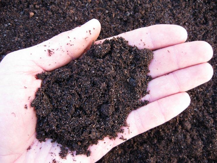 terriccio per piante grasse - piante grasse - terreno per succulente