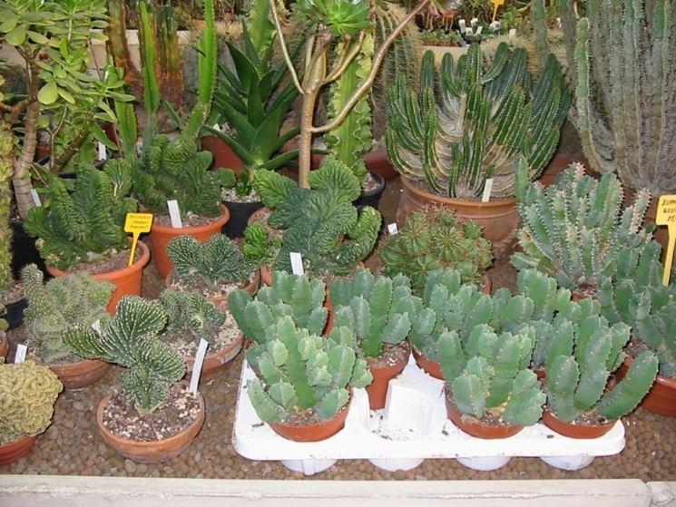 Terriccio per piante grasse piante grasse terreno per succulente - Piante per giardino ...