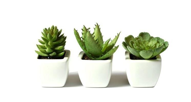 Vasetti bomboniere per piante grasse