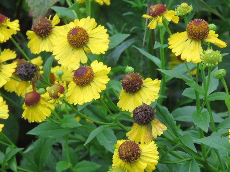 10 fiori perenni per il sole piante perenni fiori for Fiori per giardino perenni