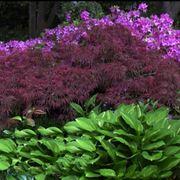 giardino all'ombra