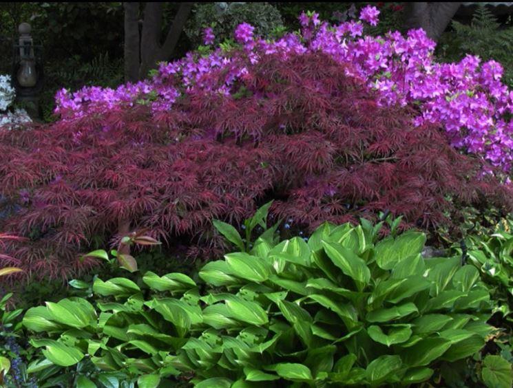 Fiori per giardini in ombra il giardino delle naiadi c for Fiori per giardino perenni