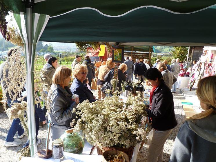 Mazzi di achillea millefolium in vendita