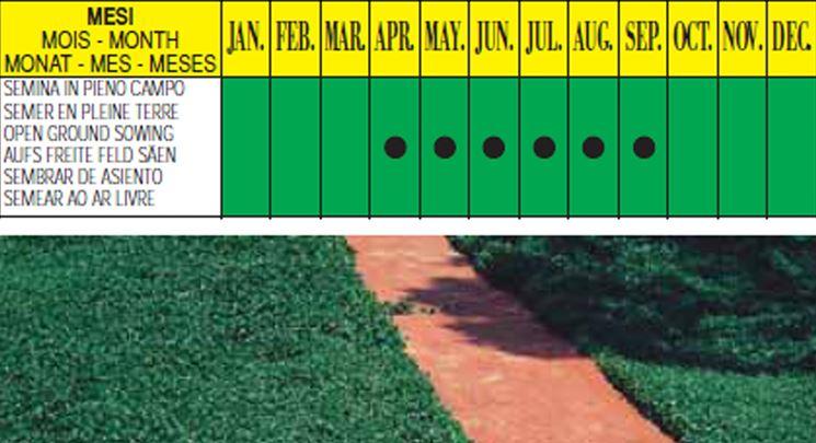 I periodi di semina della dichondra
