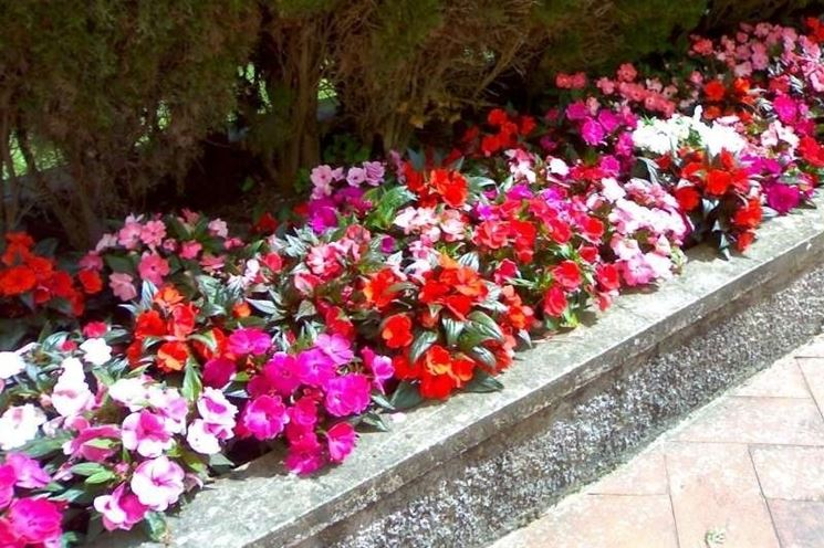 Piante Cascanti: Lingua di suocera epiphyllum piante grasse.