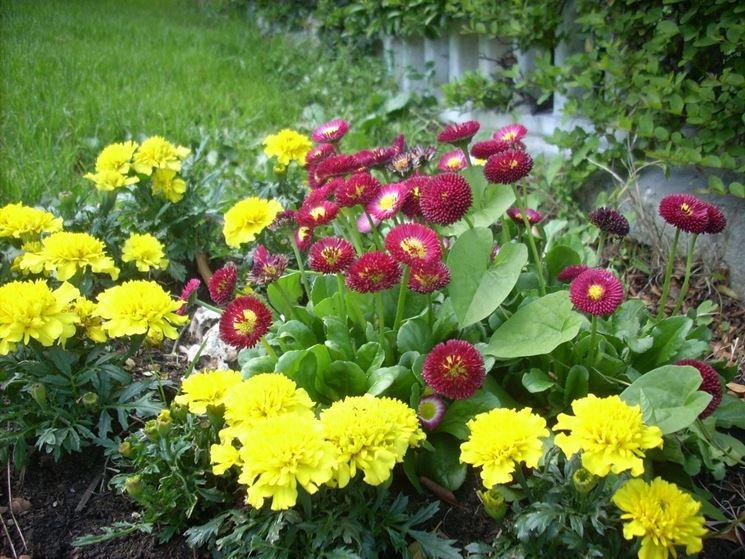 Una bordura formata da garofani gialli e altri fiori di diverso colore