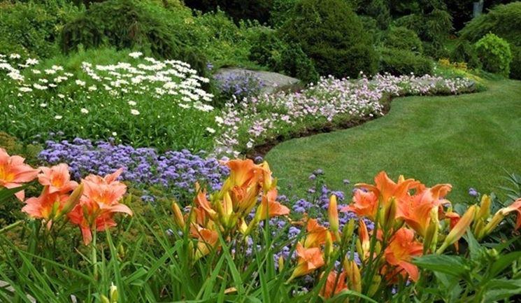 fiori da bordura piante perenni fiori da bordura