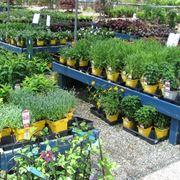 Fiori da bordura piante perenni fiori da bordura giardino - Fiori da giardino estivi ...