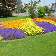 Aosta aiuola colorata