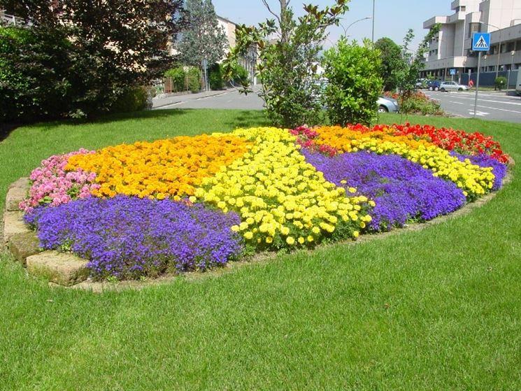 Fiori gialli nomi piante perenni nomi dei fiori gialli for Piante da aiuola