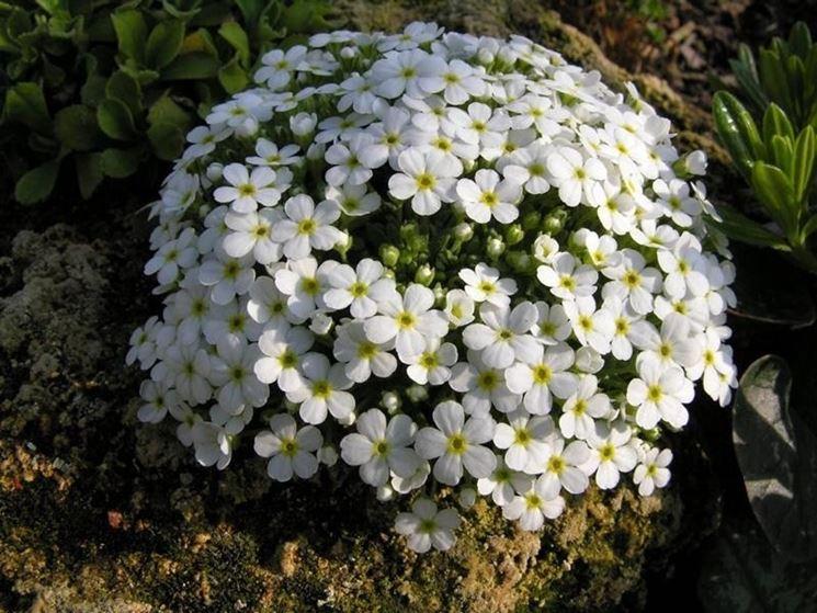 fiori per giardino piante perenni giardino con fiori