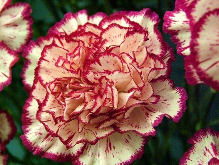 Fiori perenni piante perenni caratteristiche dei fiori for Piante perenni per bordure