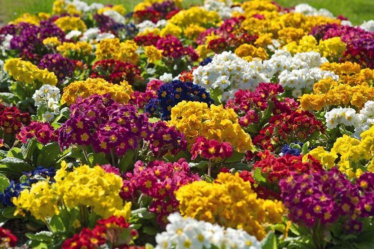 Fiori perenni piante perenni caratteristiche dei fiori - Fiori da giardino primavera estate ...
