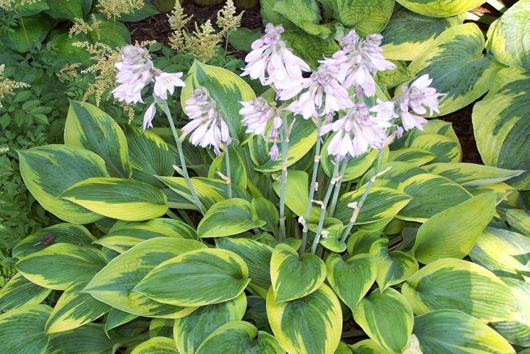 Fiori perenni piante perenni caratteristiche dei fiori for Piante secche ornamentali