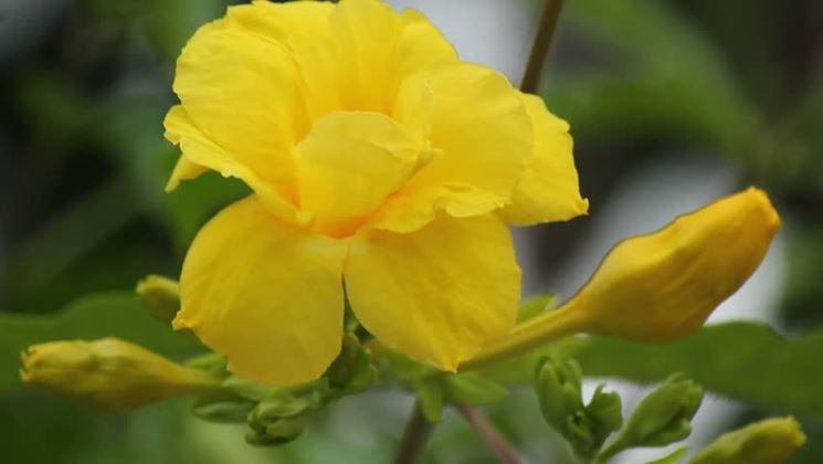 Varietà pianta coltivata