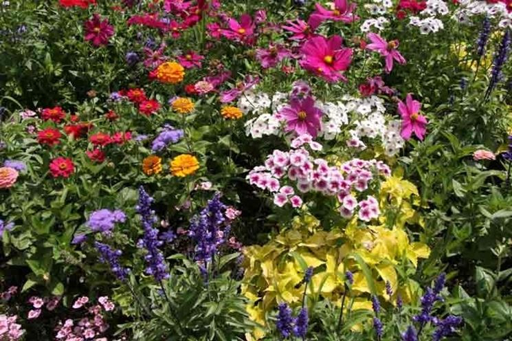 Piante da fiore perenni piante perenni piante da fiore for Piante da aiuola perenni