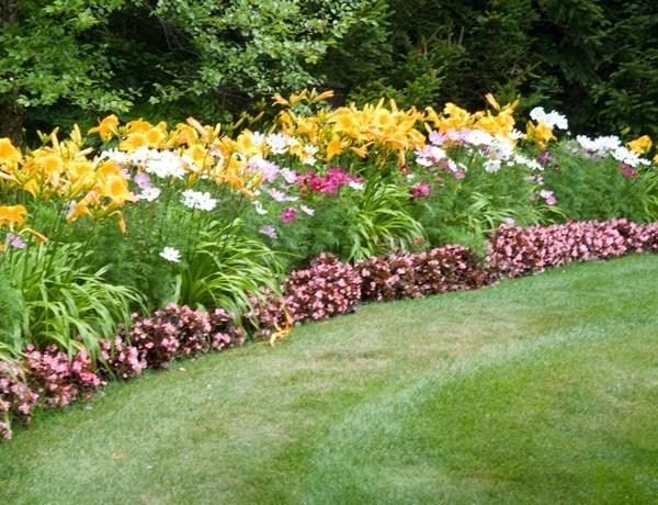 Piante da fiore perenni piante perenni piante da fiore for Piante verdi perenni da giardino