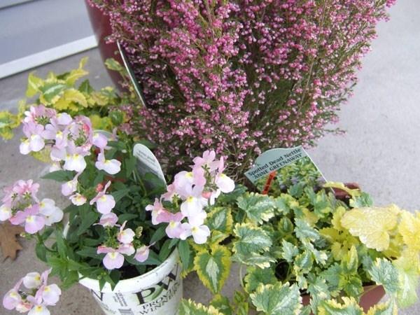 Piante da fiore perenni piante perenni piante da fiore - Fiori da vaso perenni ...