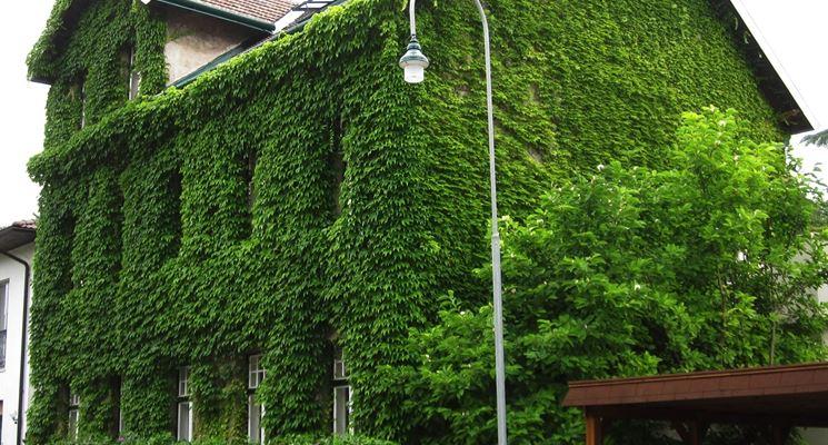 Casa completamente avvolta dall'edera
