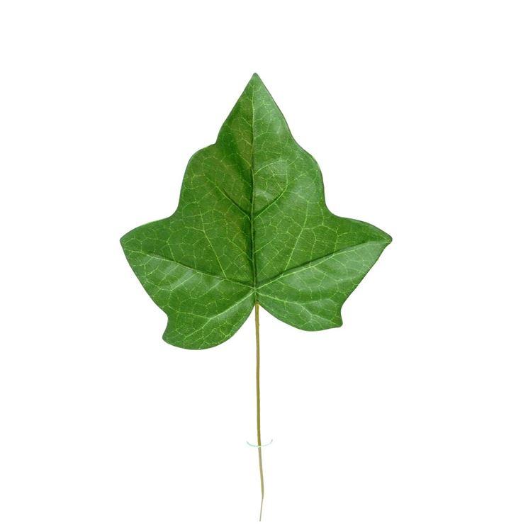 La tipica forma della foglia di edera
