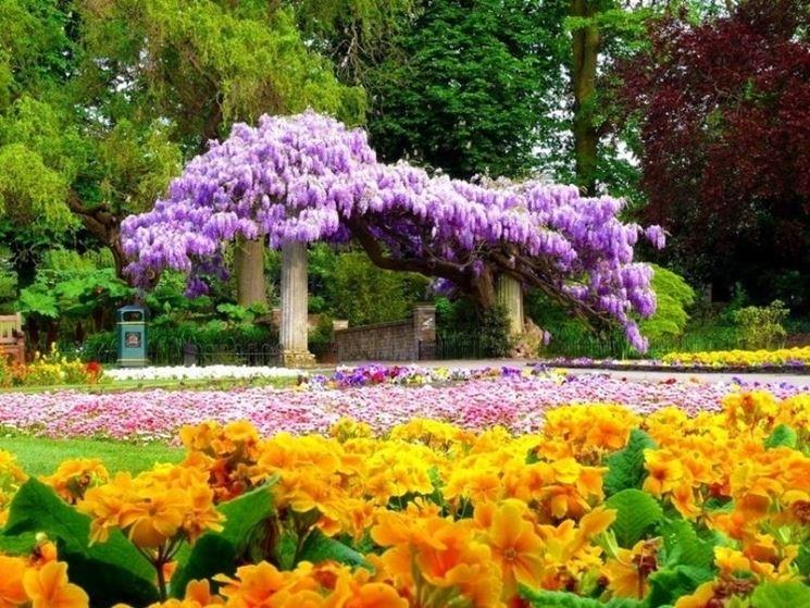 Fiori elenco rampicanti elenco fiori - Rampicanti a crescita rapida ...