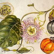 fiore frutto della passione