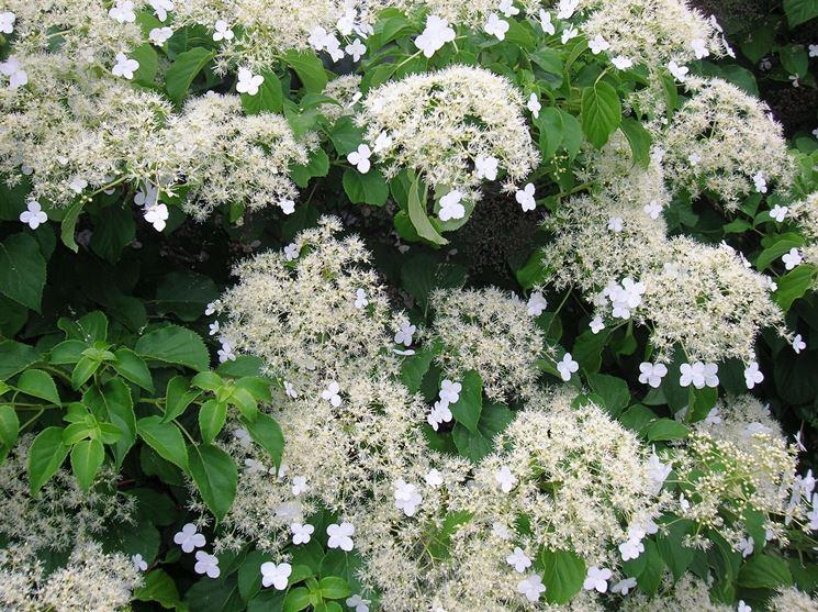 Piante rampicanti da esterno rampicanti piante - Nomi di piante da giardino ...