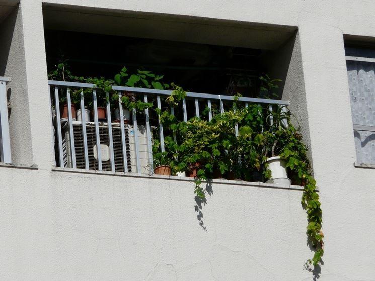 Piccolo terrazzo con rampicanti