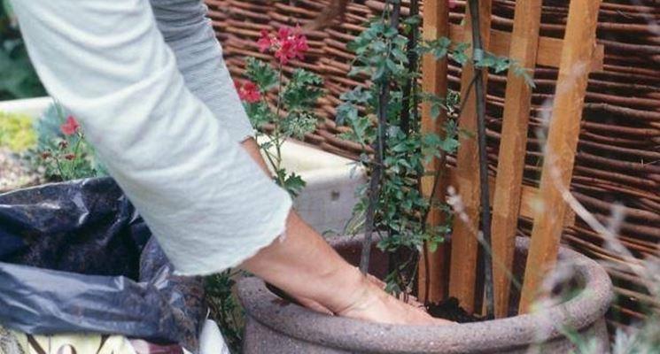 pianta rampicante sul traliccio