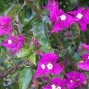pianta rampicante
