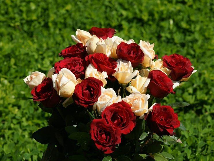 rosa ben tenuta