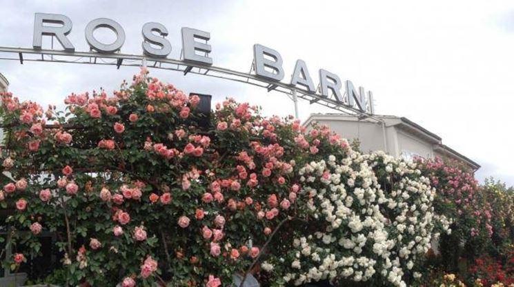 L'azienda Rose Barni