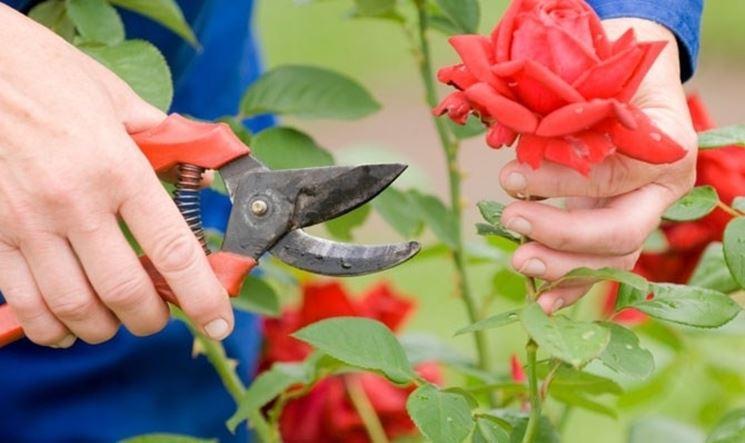 Gli strumenti del giardino