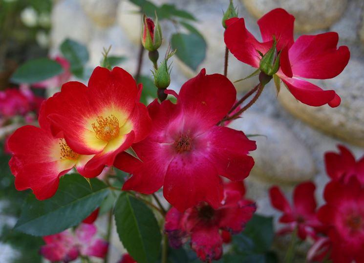 La Rosa cocktail