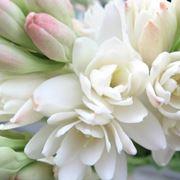 Un bouquet di tuberose
