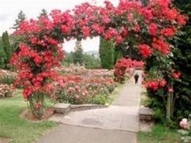 Roseto rose roseto caratteristiche - Giardino con rose ...