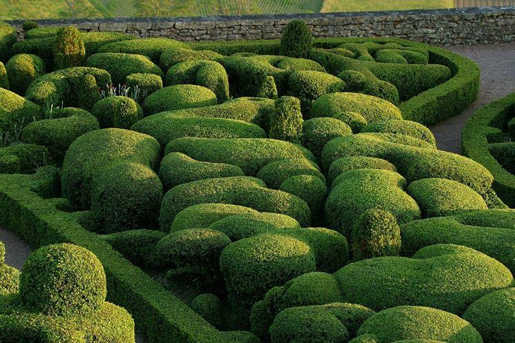 Bosso siepe siepi caratteristiche del bosso for Entretien jardin dordogne