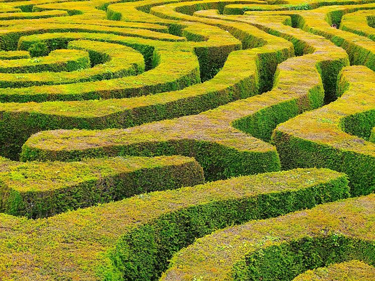 Labirinto di siepi ornamentali
